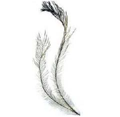 Emu Feathers 50ct (8-13 inches-Tail Feathers)